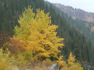 Autumn colours in Ili-Alatau National Park