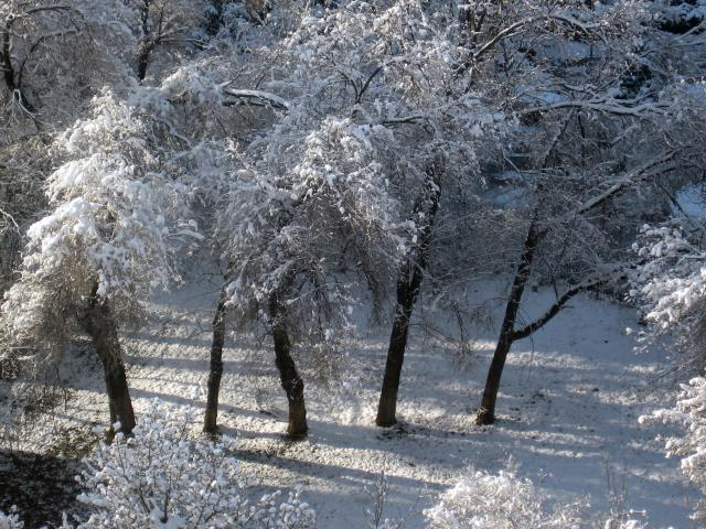 First Scattering of Snow in Almaty