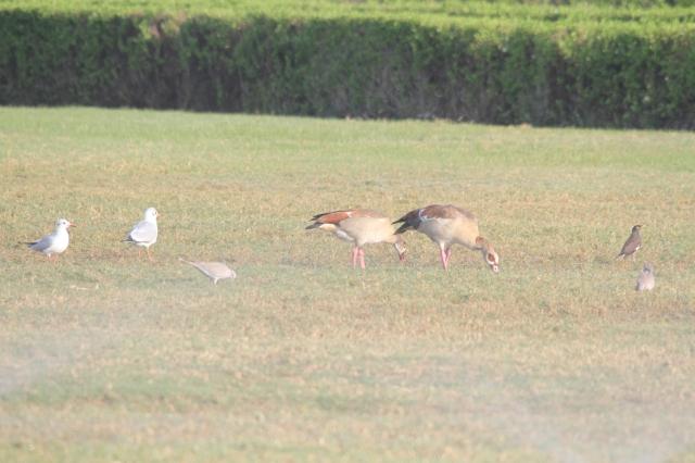 Birds Feeding in UAE