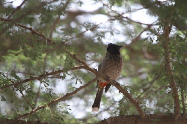 Birding in Abu Dhabi