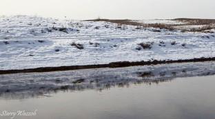 Reflections with White-tailed Eagle on Horizon Kazakhstan Feb 2016