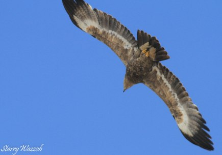 Steppe Eagle 3 Kazakhstan 160223